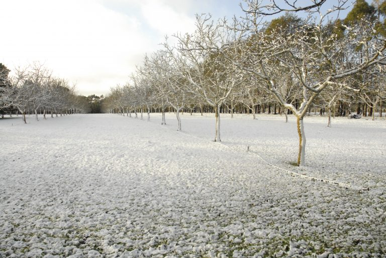 Walnuts In Winter